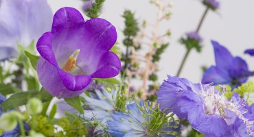 bloemenfee-boeket-speciaal