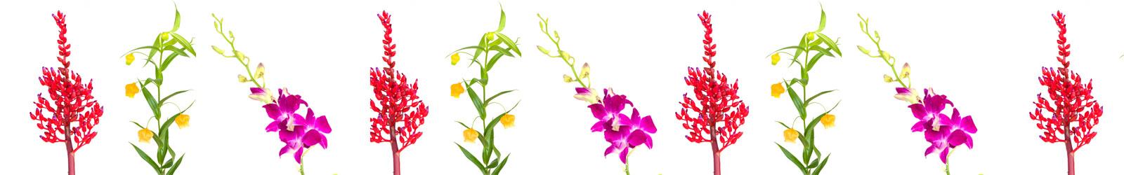 bloemenfee-assortiment