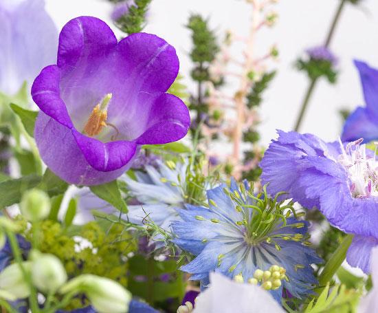 bloemenfee-verse-bloemen